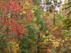 Fall foliage near Larry's cabin