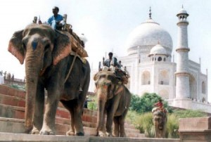 yp_elephant3