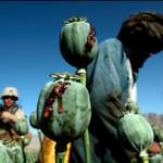 090801_AfghanistanDrugs_slasher