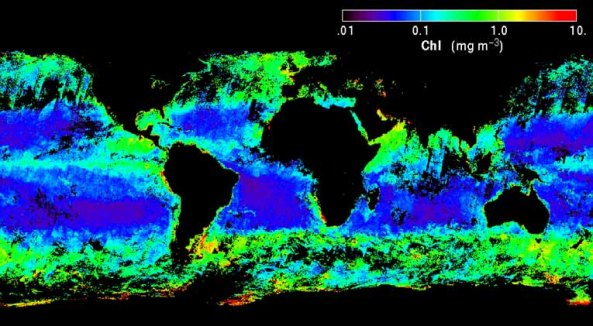 MODIS-generated ocean chlorophyll-a map.