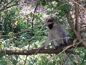 Monkey02