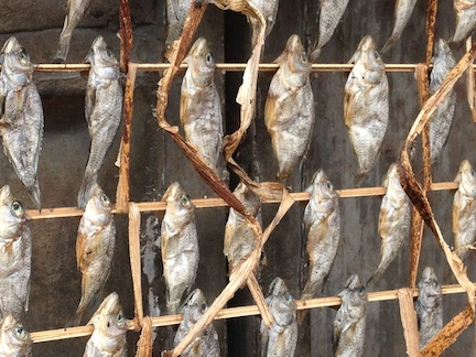 Dried mudfish, each about the size of a silver dollar