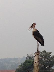 Stork02