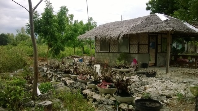 Bonsai Farm, Moalboal, Philippines
