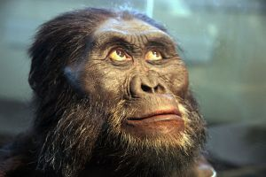 Tea Party Caucus member, I mean hominid bust at the National Museum of Natural History's David H. Koch Hall of Human Origins. Courtesy Wikimedia Commons