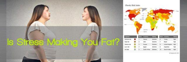 stress-fat