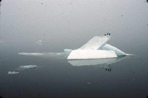 Alaska, Cooper Island, The Arctic Circle, Arctic Ocean, Barrow, North Slope, Birds, ice, ice floes, summer
