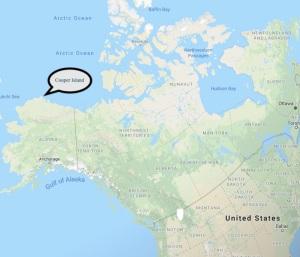 Alaska, Barrow, black guillemots, Cooper Island,Arctic, The Arctic Circle