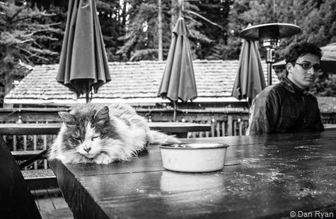 Alice's Restaurant cat Woodside California