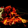 Fleurs-de-Mort